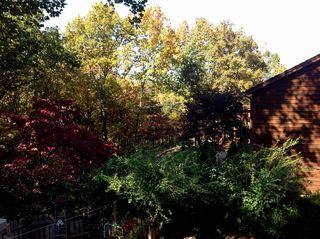 Backyard1-001