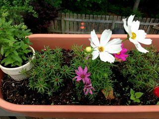 Flowersfairyy
