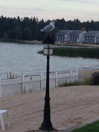 Mackinawbird